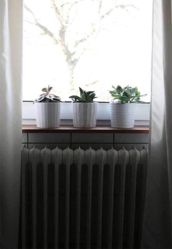 Sukkulenten im Bad auf Fensterbank