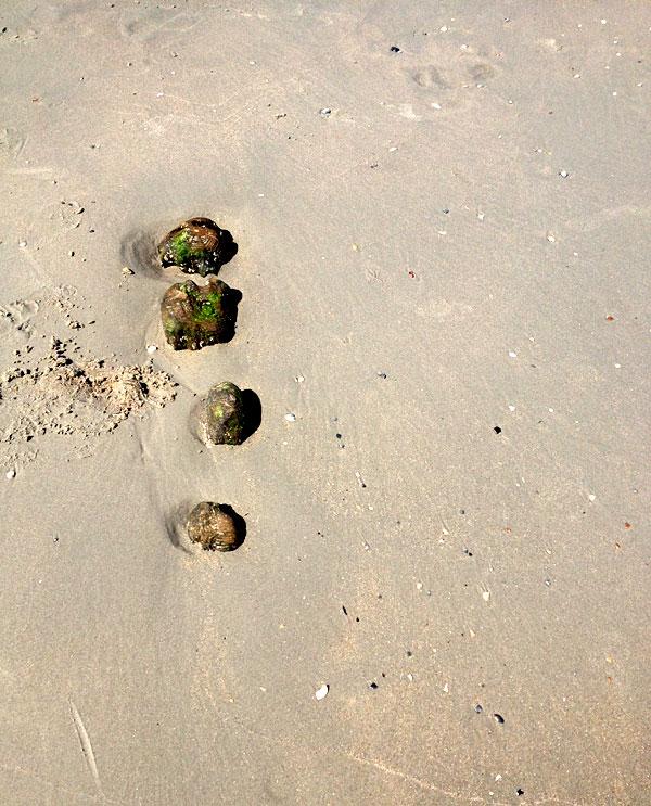 Am Strand von Norderney 12 von 12