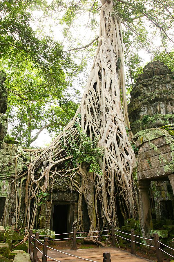 Tomb Raider Tempel in Kambodscha (Cambodia)