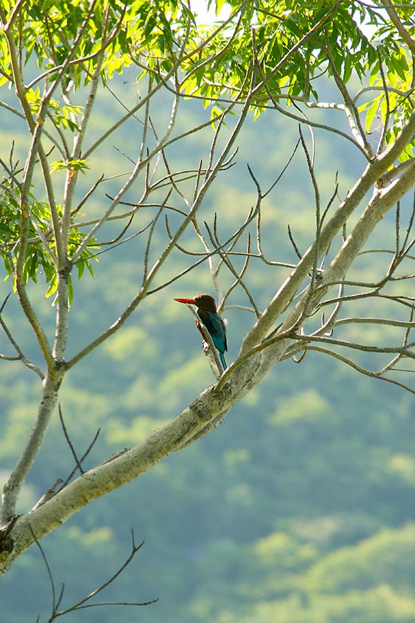 Vogel in Nha Trang, Vietnam
